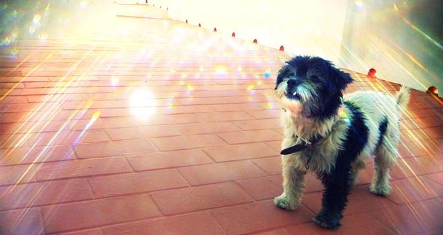 Kuki, mi perro